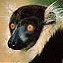 Profile picture of LemurTech